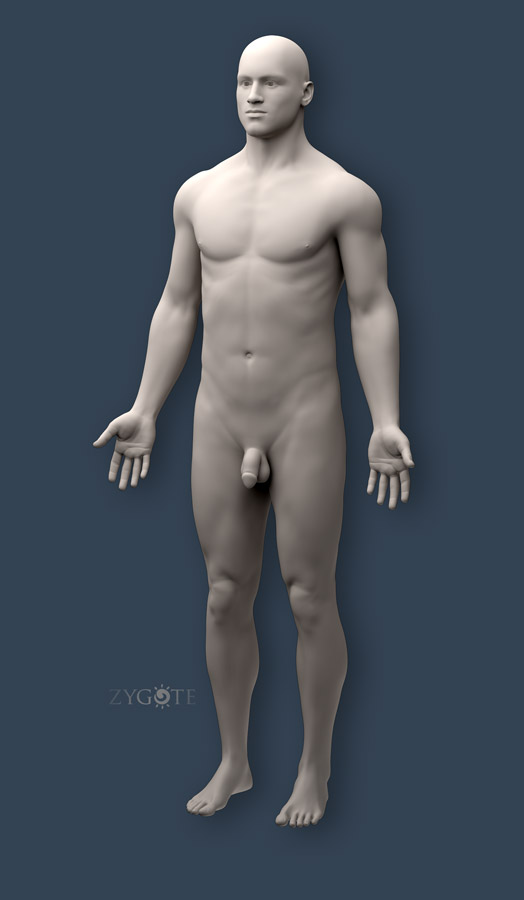 Solid 3D Male Muscular Skeletal Collection