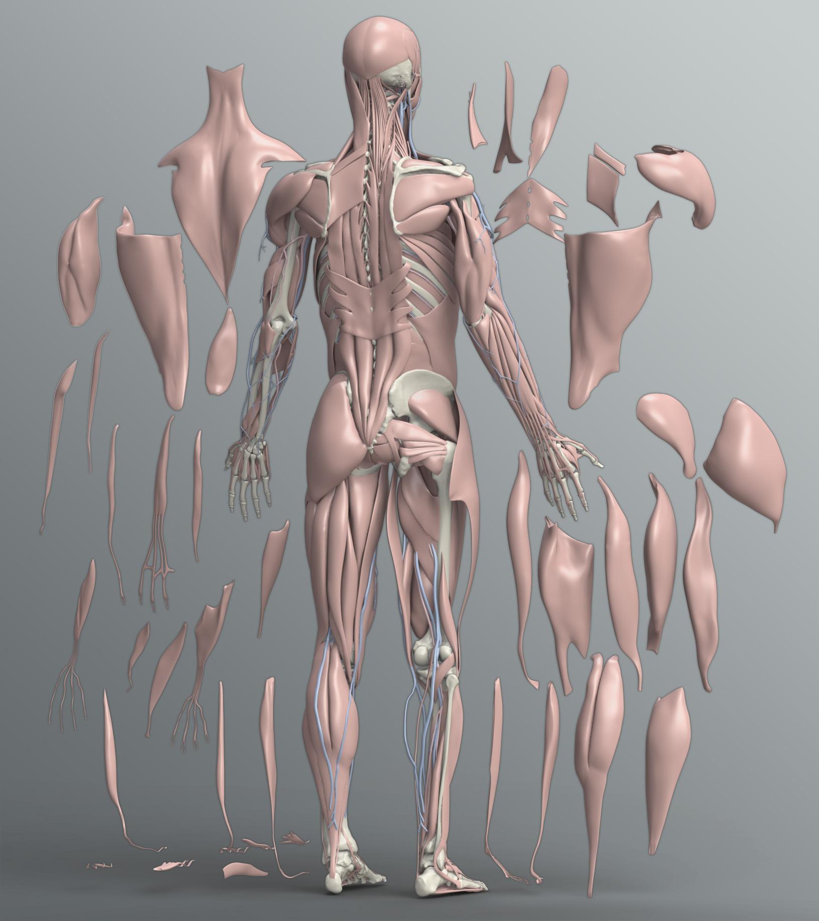beautiful human body - HD1630×1834