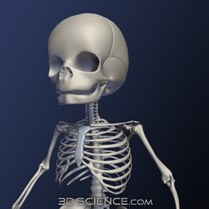Find great deals on eBay for baby skeleton. Shop with confidence.