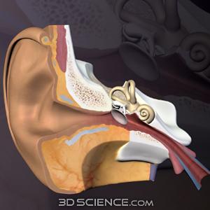 Zygote::3D Sensory