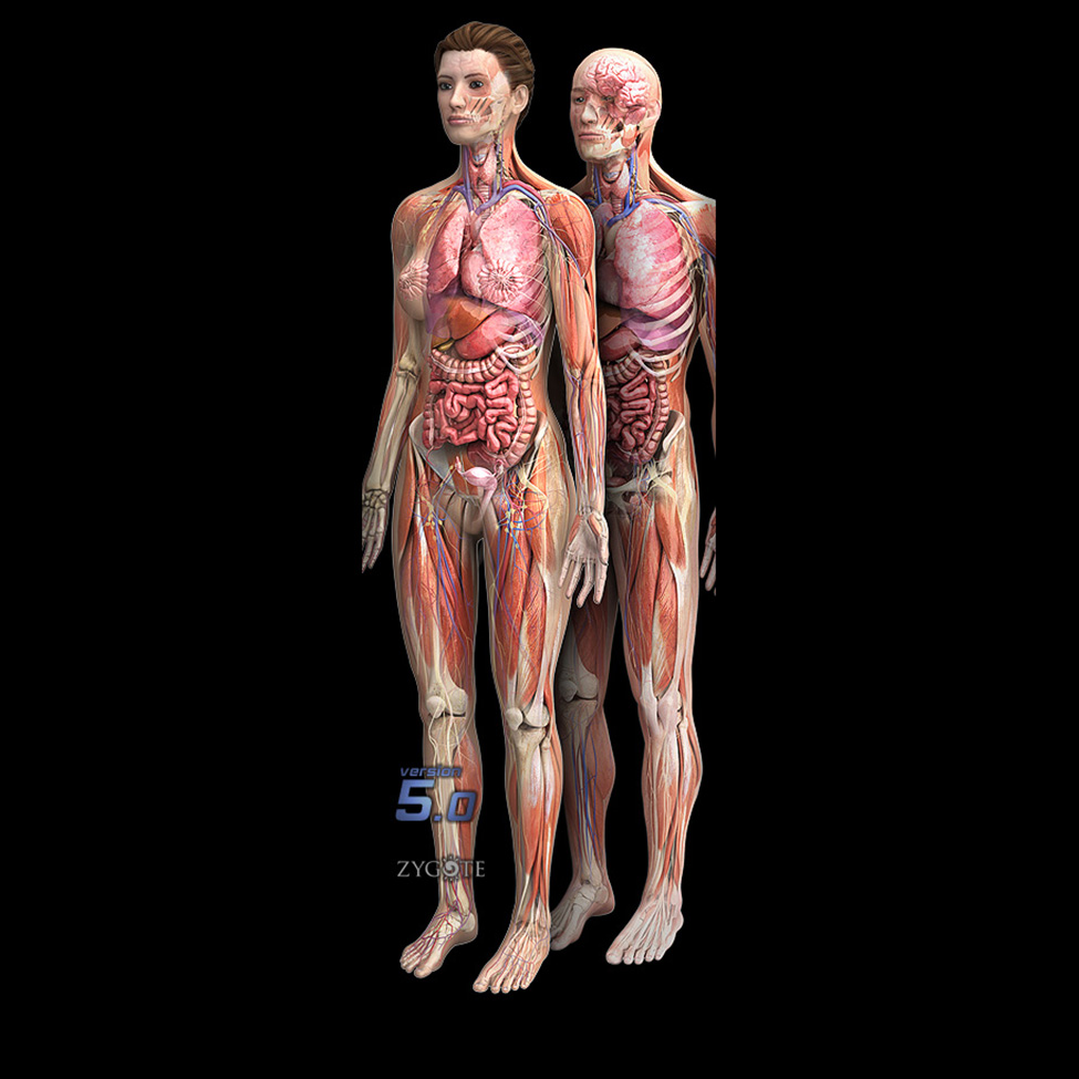 3D Male & Female Anatomy Collection