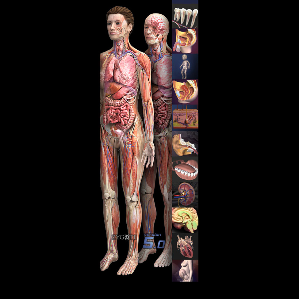 3D Premier Anatomy Collection