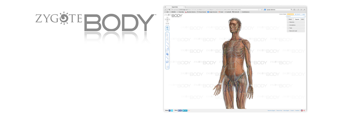 Medically Accurate 3D Human Anatomy Models