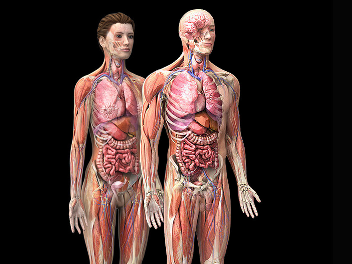 Zygote3d Male Female Anatomy Model