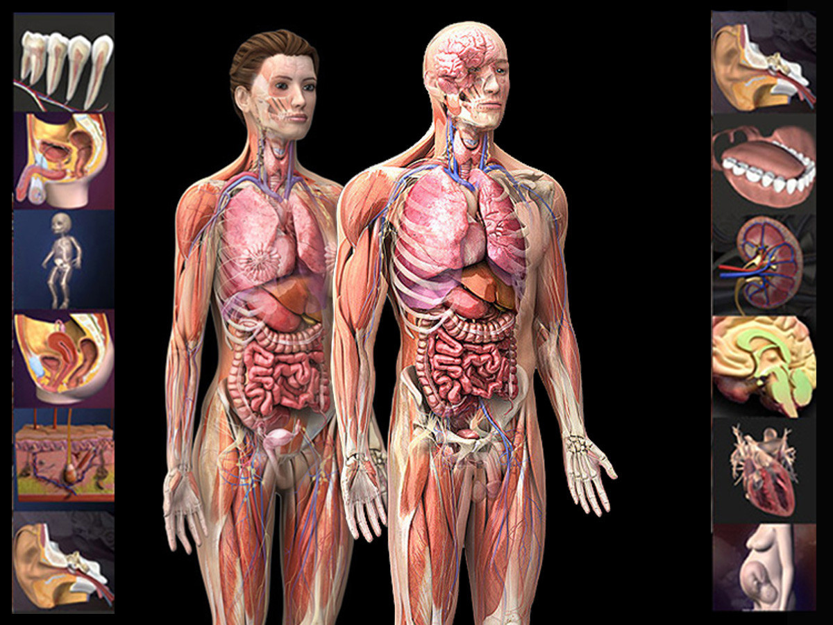 Zygote3d Human Collections
